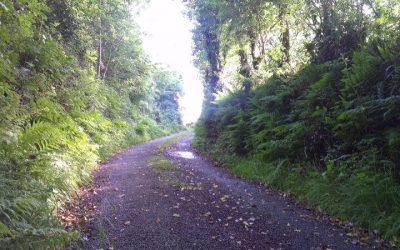 Enjoying the Irish Countryside Here and Now
