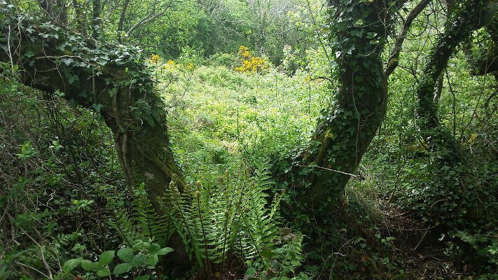 Nature-Aware-story-travel-ireland-tours-with-keith-corcoran-donegal